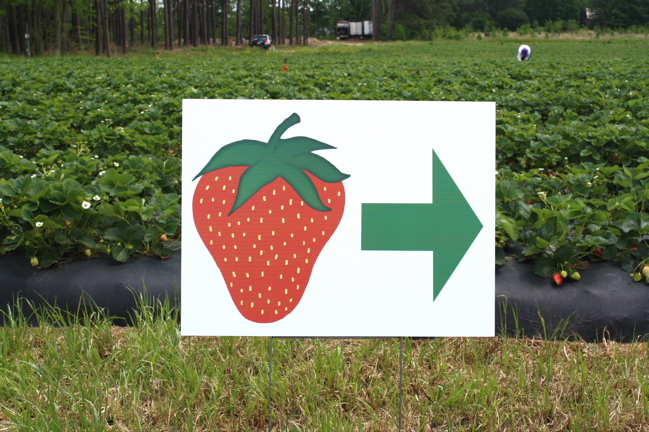 sign pointing to strawberry patch
