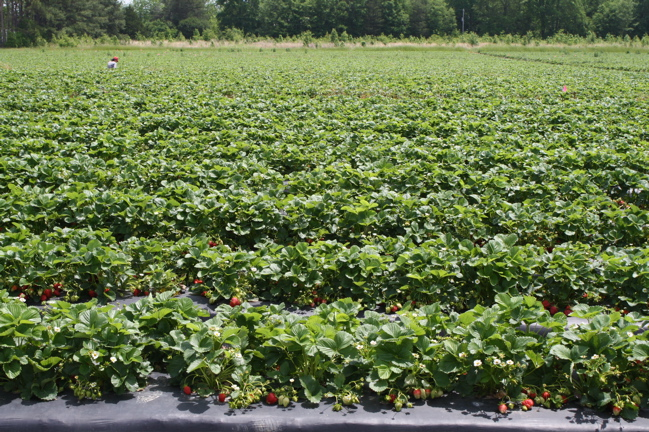 washington farms in watkinsville, ga