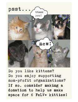 kittens! aww!